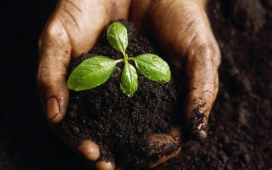Украинцам не дают торговать землей: вся правда об аграрных олигархах