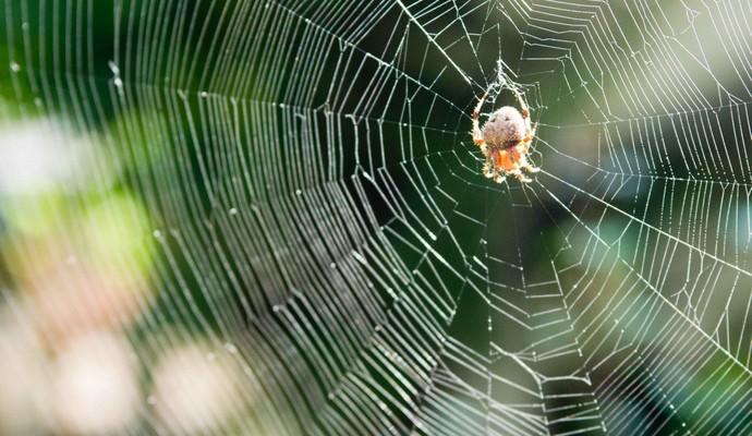 Стало відомо скільки комах живе в будинках кожного з нас