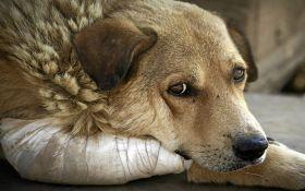 Рада ввела штрафы и тюремные сроки за жестокое обращение с животными