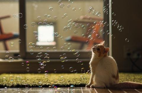 Котенок Ханна - подруга Дейзи (12 фото) (11)