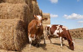 В Украине в условиях военного конфликта очень многое зависит от сельского хозяйства