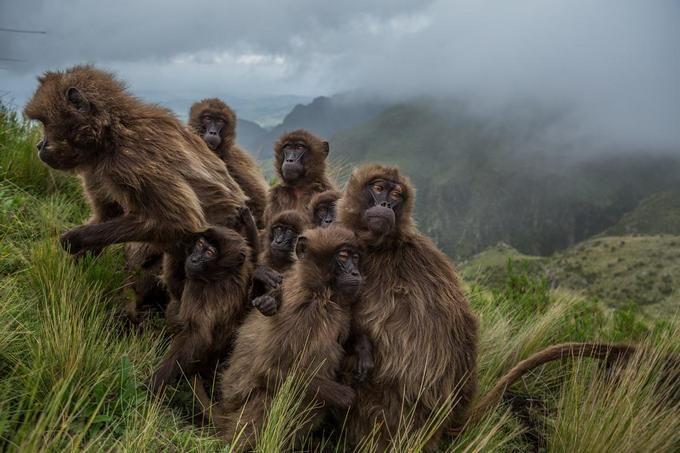 National Geographic показал лучшие фото 2017 года