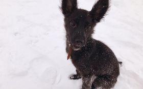 Блюма: известная украинская продюсер ищет дом для спасенного щенка