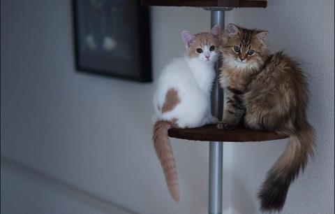Котенок Ханна - подруга Дейзи (12 фото) (8)