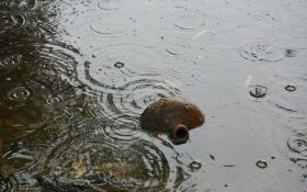 Київ закликають готуватися до нового потопу