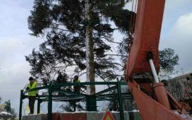 В Киеве началась установка главной елки Украины: появились фото
