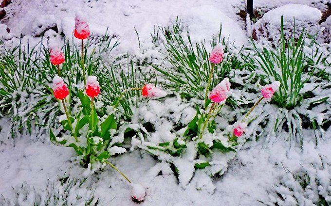 Весняні снігопади в Україні: названа причина аномальної погоди