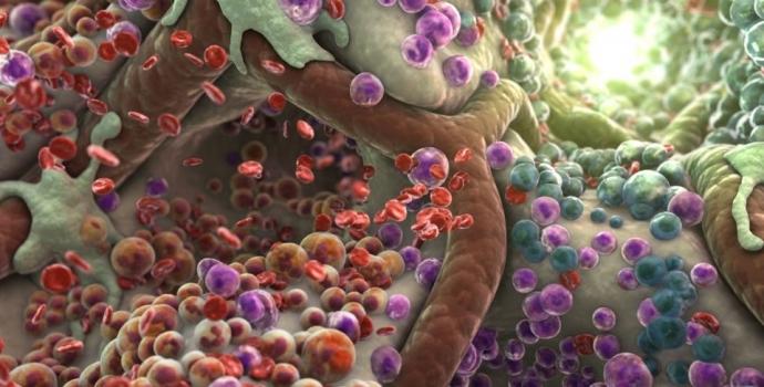 Пять продуктов, которые помогут вывести токсины из организма (6 фото)