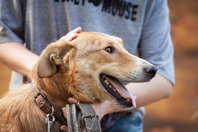 Як взяти собаку з притулку та зробити правильний вибір (1)