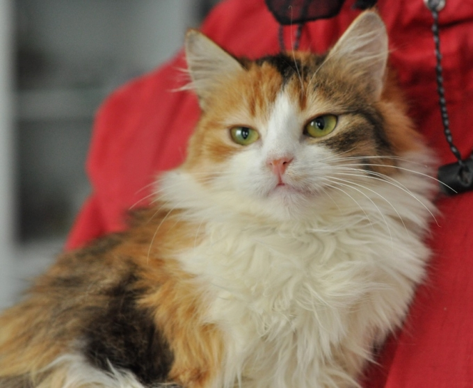 Найди друга: пушистые котики ждут любящих хозяев (5)