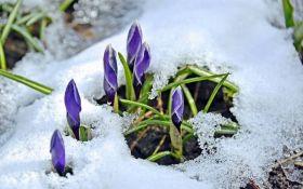 У Києві з-під снігу з'явилися перші проліски: опубліковані яскраві фото