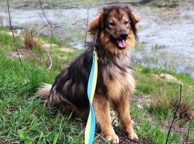 Найди друга: необыкновенные собаки ждут любящих хозяев (10)