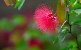 Сигнальні молекули лиха: в рослинах виявили аналог нервової системи