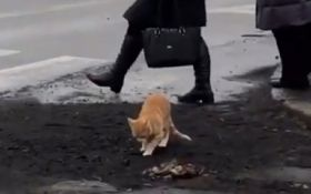 """В Николаеве кот """"оценил"""" качество свежего асфальта - опубликовано эпичное видео"""