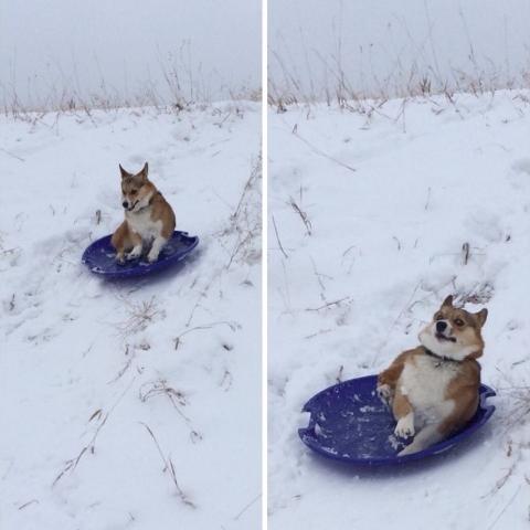 Наймиліші собачі фейли (17 фото) (3)