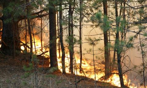 Укргідрометцентр попереджає про надзвичайну пожежонебезпеку в більшості областей (1)