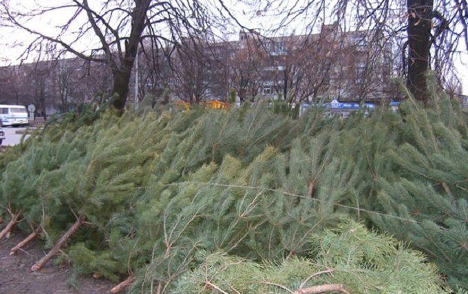 НаАлексеевке активисты отобрали уреализаторов елки ираздали бесплатно