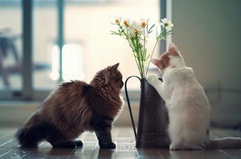 Котенок Ханна - подруга Дейзи (12 фото) (10)