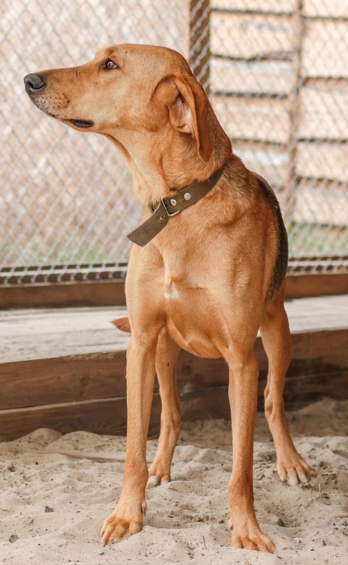 Найди друга: 8 замечательных собачек мечтают найти дом (4)