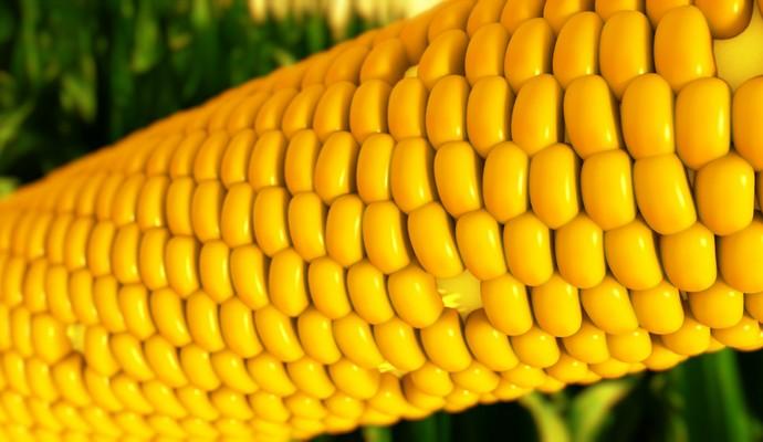 Україна вже використала річну квоту на експорт кукурудзи до ЄС