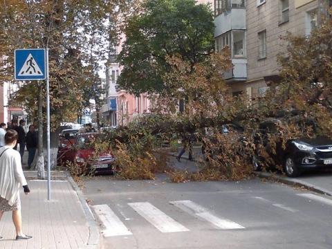 У центрі Києва величезне дерево звалилося на машини (4 фото) (1)