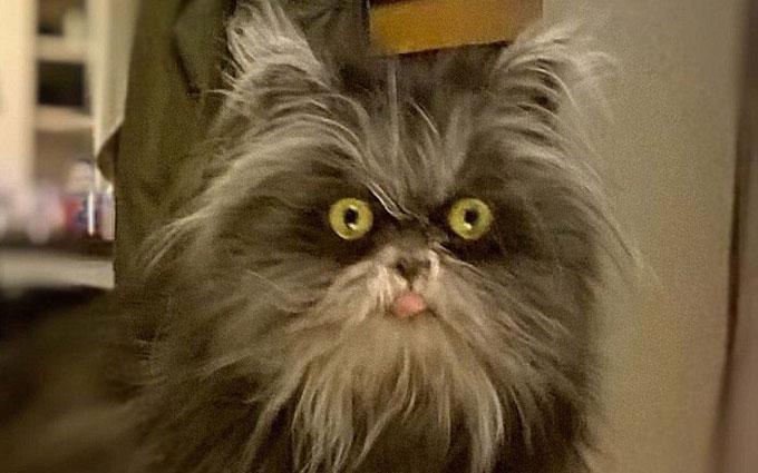 В Канаде объявился кот-оборотень: опубликованы фото