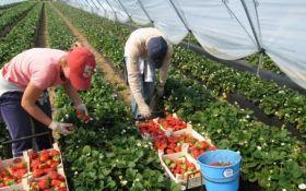 Уряд Польщі планує запровадити податок за працевлаштування сезонних заробітчан