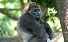 На межі вимирання: названі тварини, які можуть зникнути на Землі