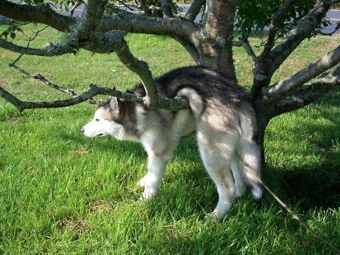 Наймиліші собачі фейли (17 фото) (14)