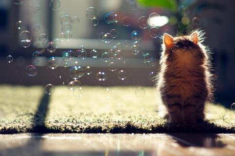 Котенок Ханна - подруга Дейзи (12 фото) (12)