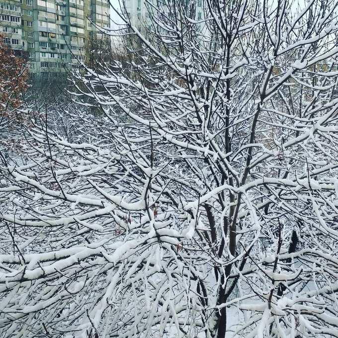 Киев засыпало снегом: в сети опубликованы яркие фото и видео (3)