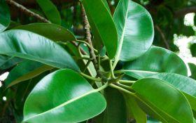 ТОП-5 комнатных растений, которые сделают воздух в доме очень чистым