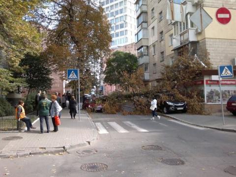 У центрі Києва величезне дерево звалилося на машини (4 фото) (2)