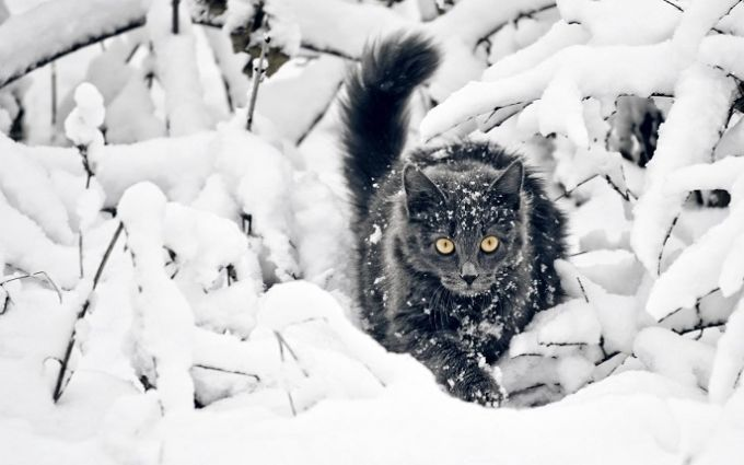 На Маланку и Василия придут крепкие морозы, - синоптик о погоде на выходных в Украине