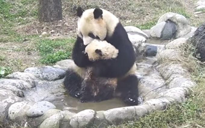 Еровидео онлайн с пандой