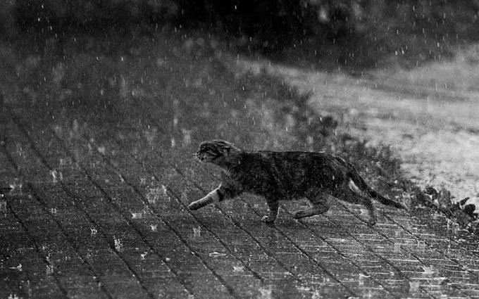 Погода в Украине на вторник 1 марта: сильные дожди и порывы ветра, температура от +1 до +15