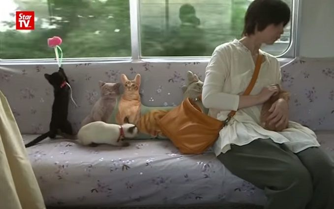 В Японий запустили поезд с котами: появилось видео
