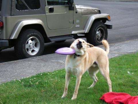 Наймиліші собачі фейли (17 фото) (12)