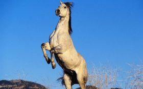 Дайте хоч коня: соцмережі повеселив рапорт з передової АТО