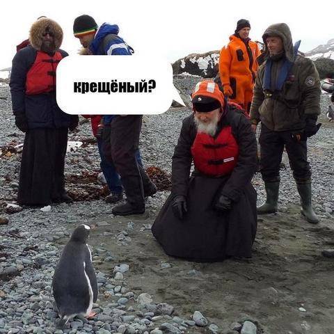 В сети продолжают смеяться над главой РПЦ с пингвинами: появились веселые картинки (1)