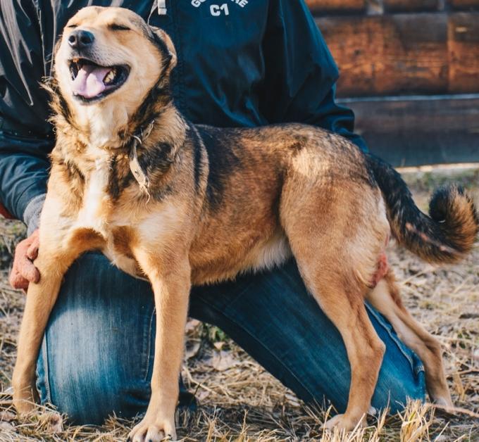 Найди друга: 8 замечательных собачек мечтают найти дом (7)
