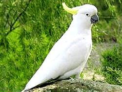 Потерявшийся попугай вернулся домой благодаря умению говорить