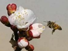 Марафон в Японии: 30 человек госпитализированы после укусов пчел