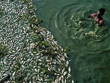 Из-за падения доллара в Украине подорожает рыба и морепродукты