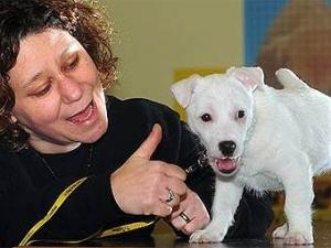 Глухой щенок научился понимать язык жестов