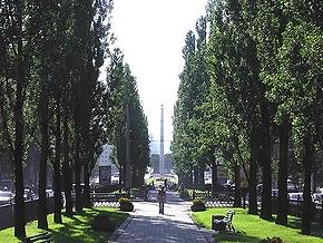 В Киеве озеленят скверы и бульвары