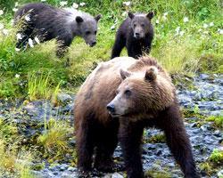 В Румынии голодные медведи пришли в ресторан