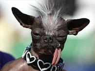 Пес из Нью-Джерси подтвердил звание самого уродливого в мире