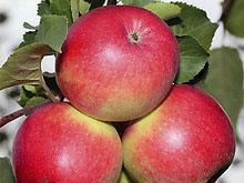 Самый полезный в мире фрукт