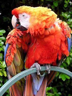 Попугай научил своих друзей ругаться матом
